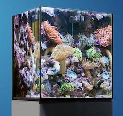 Hqi Licht Technik Komplett Aqua Medic Kauderni 200 Liter Meerwasser Aquarium