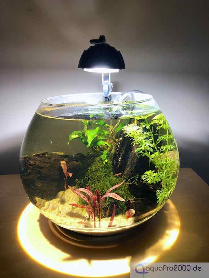 Kugelaquarium - Goldfischglas