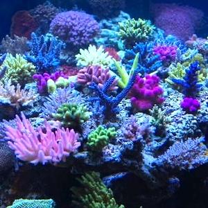 Coral Propagation