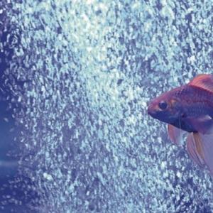 Aquarium Luftpumpe