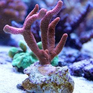 Korallenkleber - Deko & Riffmörtel