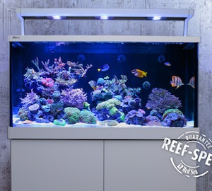 Red Sea Aquarium
