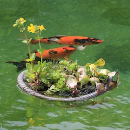 Koi & Pond Supplies