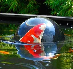 Pond Decor