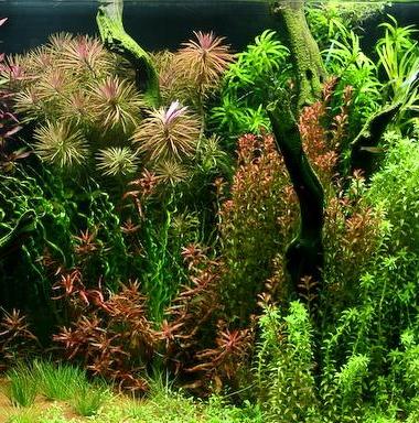 Aquarium Starterbakterien