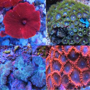 Best Price / Korallensets