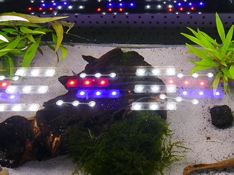LED Bausatz Aquarium