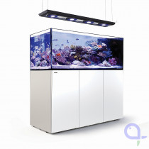 Red Sea Reefer Peninsula 650 Deluxe Weiss Raumteiler Meerwasseraquarium