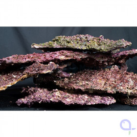 Real Reef Rock Platten - Shelf Rock (kg)