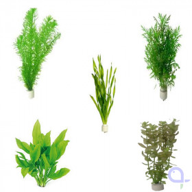 Aquarium plants set 10 bundles