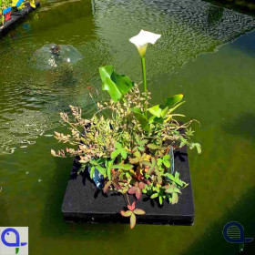 Floating Plant Island incl. Plants - Koi Pond Island