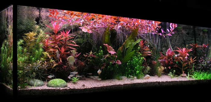 Bild Aquarium mit Back to Nature 3 D Rückwand