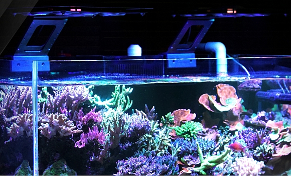 maxspect led led aquarium beleuchtung beleuchtung meerwasseraquaristik aquapro2000. Black Bedroom Furniture Sets. Home Design Ideas