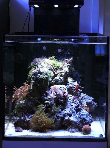 meerwasseraquarium einrichten schritt f r schritt aquapro2000. Black Bedroom Furniture Sets. Home Design Ideas