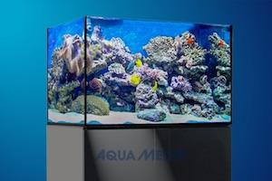 Meerwasseraquarium Xenia