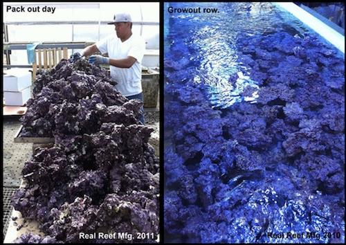 Real Reef Rock Herstellung