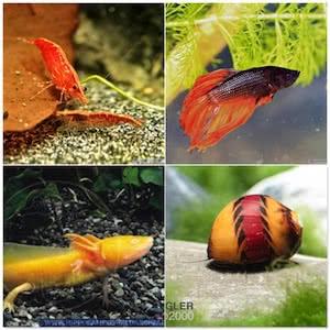 Zierfische - Garnelen - Schnecken - Amphibien