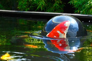 Teich Fish-Dome