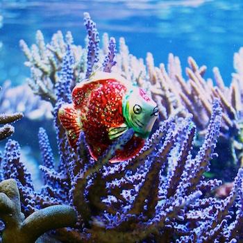 Shop f r aquaristik und teich aquapro2000 for Meerwasser aquaristik shop
