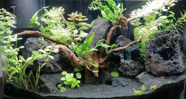 Beispiel Bild aquascaping