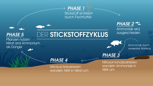Stickstoffkreislauf Aquarium